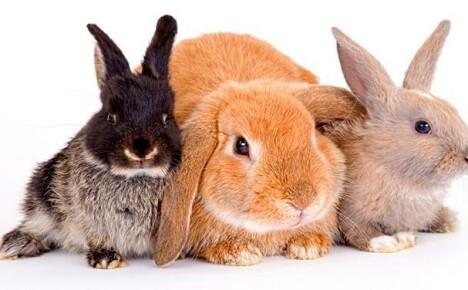 Кролики — подборка коротких вопросов-ответов!