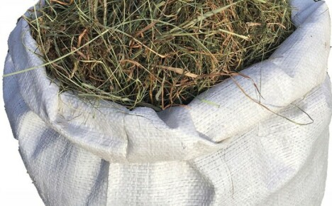 Какое сено для кроликов лучше давать, чтобы вырастить здоровое поголовье