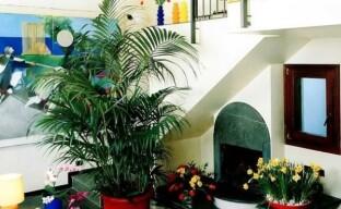 Неприхотливая перистолистная пальма Ховея для вашего дома