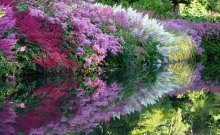 Что нужно знать, выращивая астильбу в саду