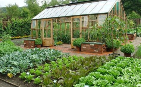 Дачный календарь: огородные хлопоты в июне