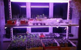 Естественное освещение и искусственная подсветка для рассады