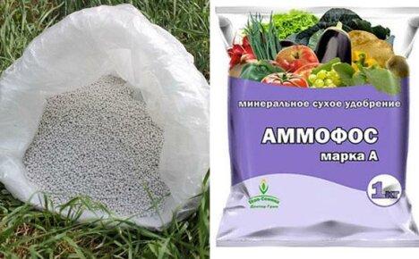 Удобрение Аммофос для использования на дачном участке
