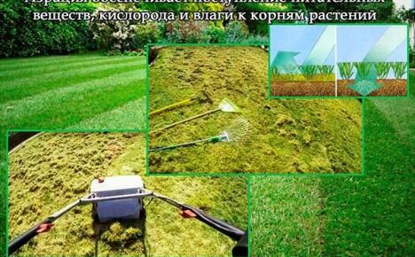 Советы по уходу за газоном после зимы