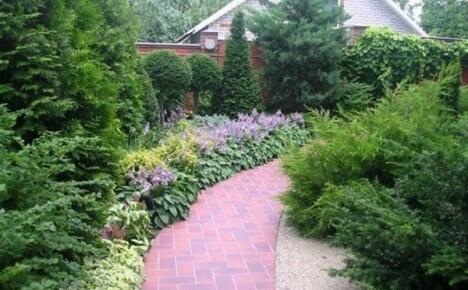 Как превратить дачный участок в оазис наслаждений и что посадить вдоль забора