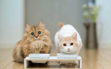 Виды корма для кошек, советы по подбору питания