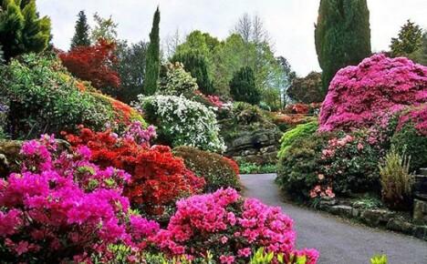 Необычно красивые цветущие кустарники на дачном участке