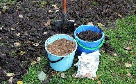 Особенности осенней подкормки смородины и малины