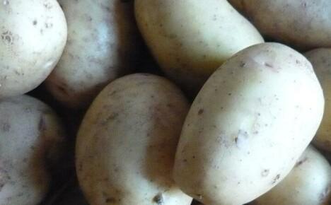 Посадочный картофель Адретта – правила выращивания и секреты ухода
