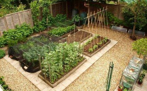 Как спланировать огород на маленьком участке?