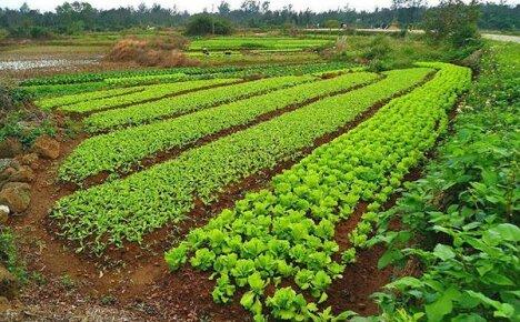 Севооборот и комбинированные посадки — система контроля урожайности