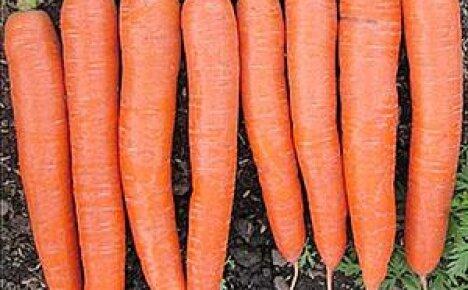 Выращивание моркови по Митлайдеру
