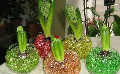 Покупаем и используем гидрогель для растений