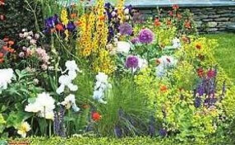 Как сделать клумбу непрерывного цветения (особенности посадки и выращивания)