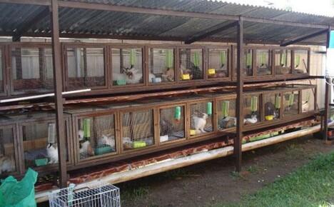 Шедовое содержание кроликов: описание, преимущества, технология сооружения