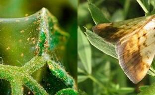 Борьба с вредителями сада при помощи биологических препаратов