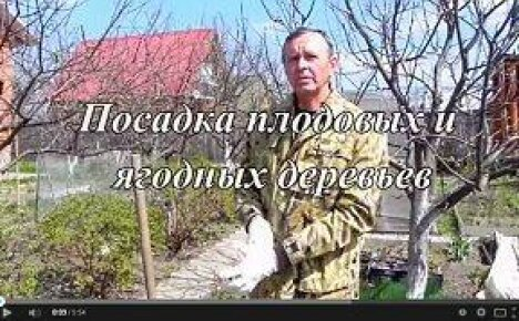 Правильная посадка саженца (видео)