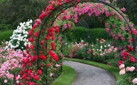 Идеи дизайна садовой арки