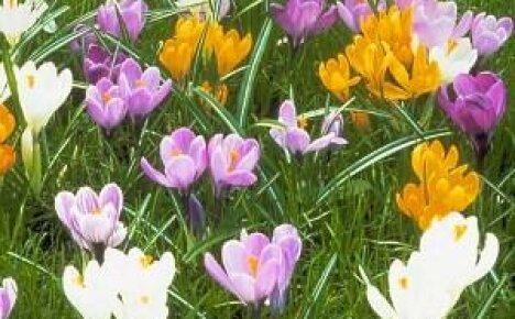 Обзор многолетних цветов для дачи с фото и названиями