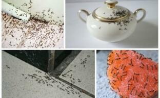 Как избавиться от муравьев в доме — эффективные методы