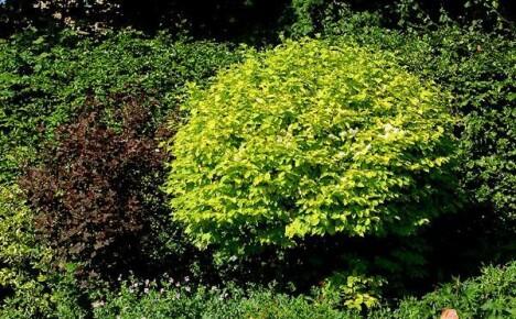 Сделайте свой участок солнечным, высадив желтые растения в саду