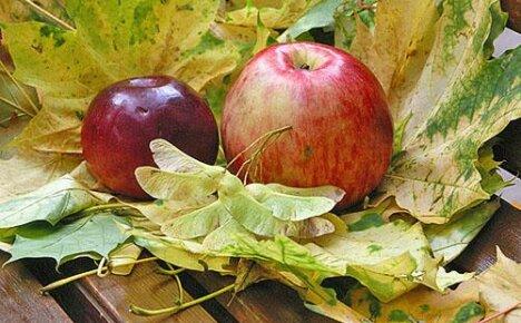 Описание и фото осенних сортов деревьев в яблоневом саду