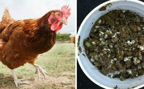 Используем куриный перегной как удобрение для огорода