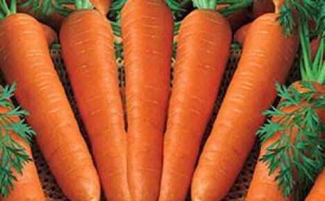 Выращивание и уход за морковью в открытом грунте