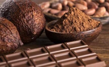 Удивительный путь от боба до шоколадной плитки — дерево какао