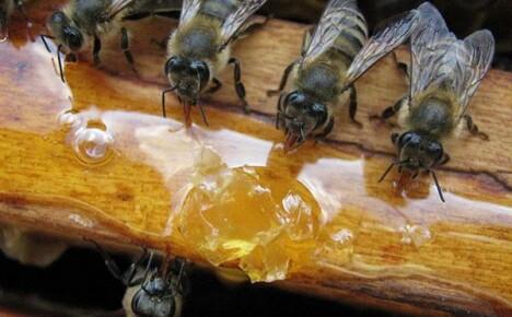 Зачем нужна весенняя подкормка пчел
