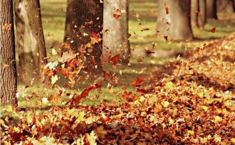 Вы все еще боритесь с опавшими листьями традиционными методами? Многие их уже косят.
