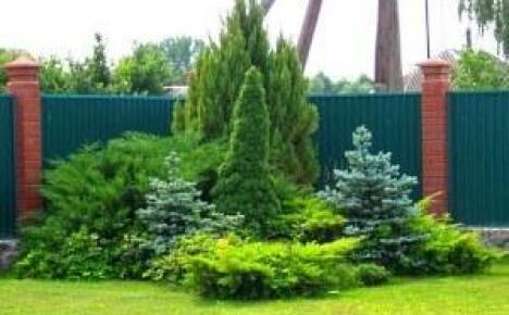 Клумбы из хвойных растений – вечнозеленые оазисы в ландшафтном дизайне