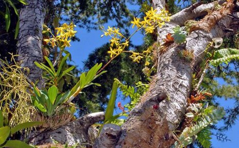 Фото и названия видов экзотической орхидеи