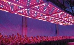 Светильники для подсветки растений