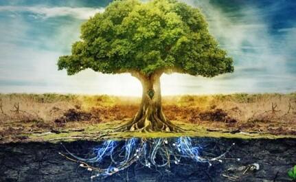 Это интересно знать — продолжительность жизни деревьев