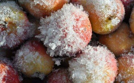 Быстрая заморозка яблок на зиму