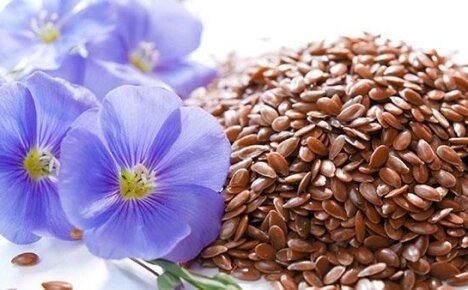 Верный страж здоровья – семена льна