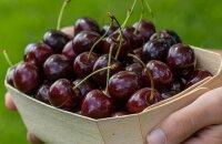 К какому виду по срокам созревания относится вишня Балатон — описание сорта и его преимущества