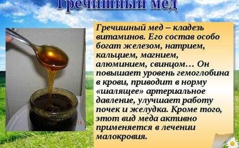 Чем полезен гречишный мед, и как извлечь из него максимальную пользу