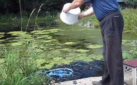 Лечение рыбы от краснухи