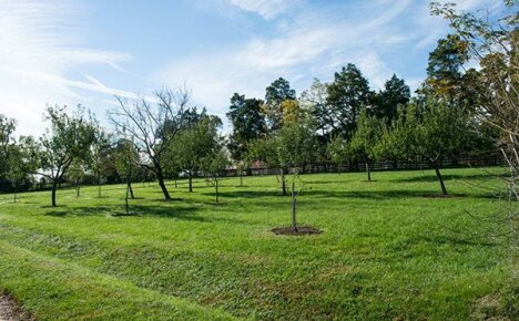 Плодовые деревья и кустарники для садового участка