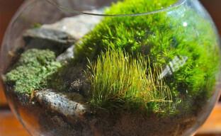 Как самостоятельно собрать мох для подстилки в террариуме