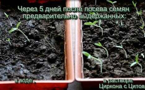 Волшебная ампула для семян и рассады — препарат Цитовит