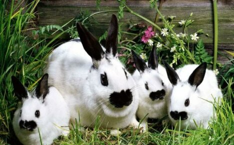 Кролиководство для начинающих