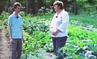 Выращивание укропа (видео)