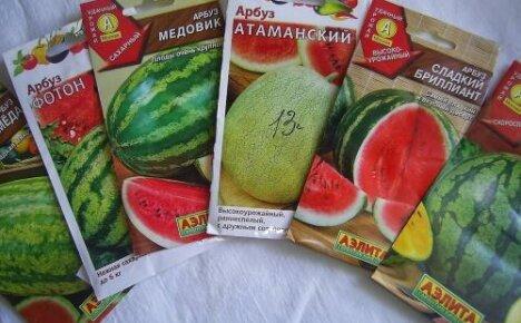 Сроки посадки арбузов на рассаду и в открытый грунт