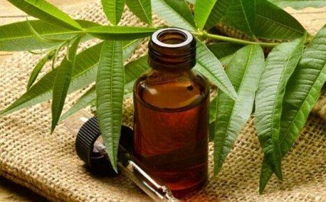 Природный антисептик – масло чайного дерева