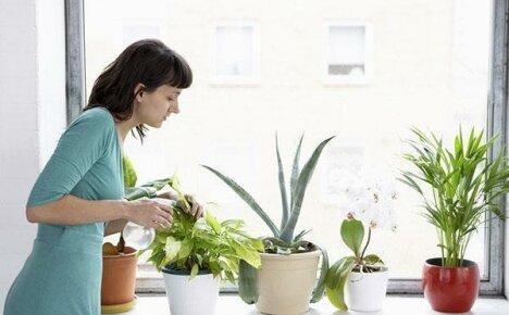Представляем вашему вниманию 11 натуральных удобрений для ухода за домашними цветами
