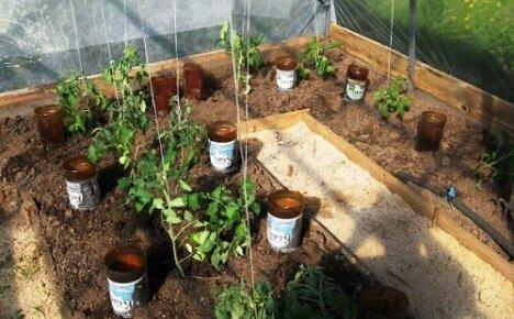 Применение пластиковых бутылок для полива в огороде