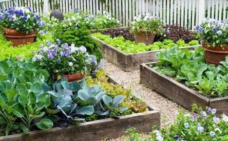 Натуральные органические удобрения – основные виды, преимущества использования